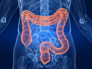 Une flore intestinale en santé : énergie et une bonne immunité